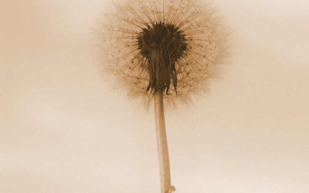 Ważny temat: alergia. Na czym polega odczulanie?